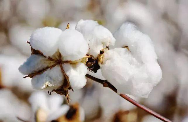 羽绒被纯棉面料