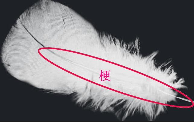 定制羽绒被