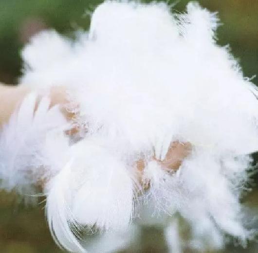 润波顿·鸭毛片